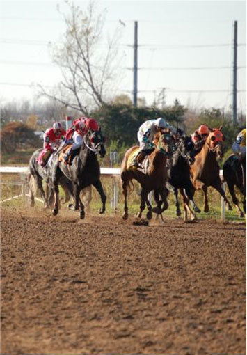 View Niagara's Race Track & Feed Delivery Services